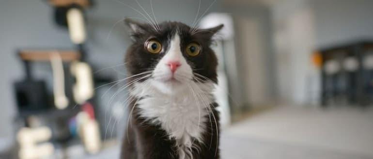 Kaip teisingai glostyti katę?