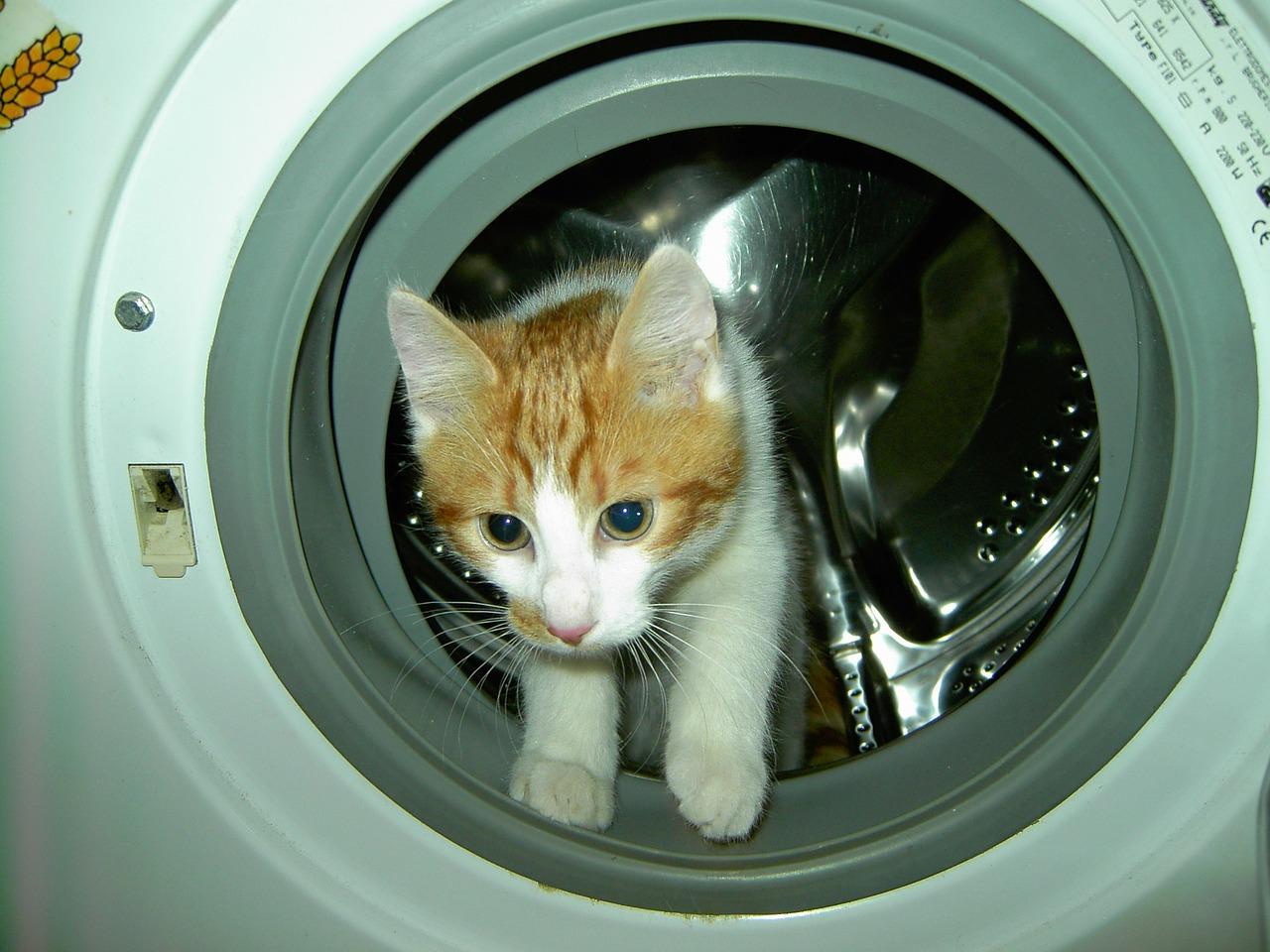 Kaip apsaugoti skalbimo mašiną nuo gėdimų
